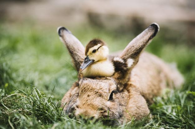 Værd at vide om korrekt pasning af kaniner