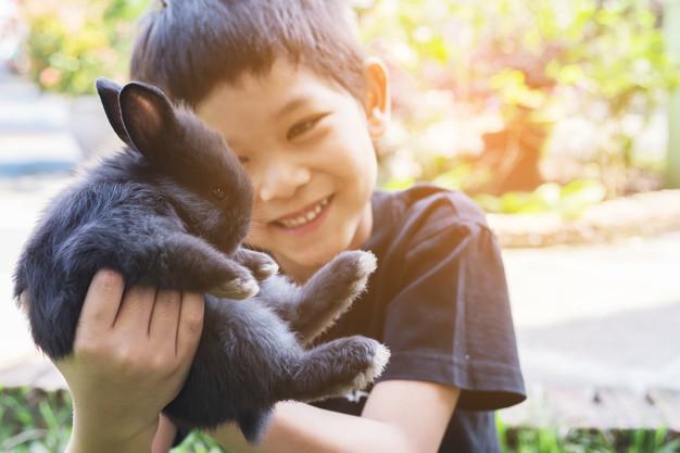 dreng der leger med kanin