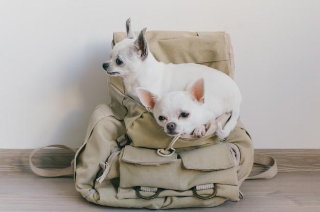 Sådan vælger du transporttaske til hunde