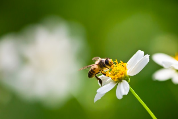 Få 3 tips til at undgå hidsige bier